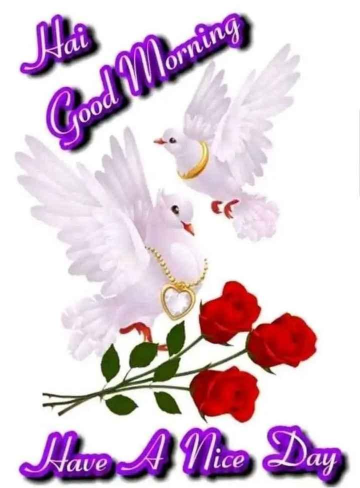 🌞காலை வணக்கம் - Mai Good Morning Have A Nice Day - ShareChat
