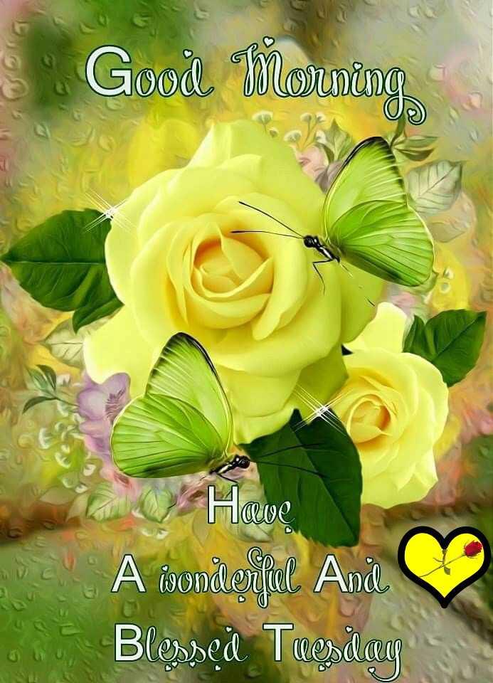 🌞காலை வணக்கம் - • Good Morning Have A wonderful Ande Во неа Томатит - ShareChat