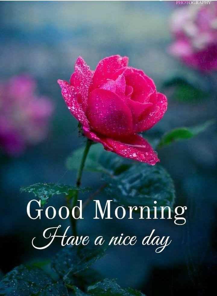 🌞காலை வணக்கம் - PHOTOGRAPHY Good Morning Have a nice day - ShareChat