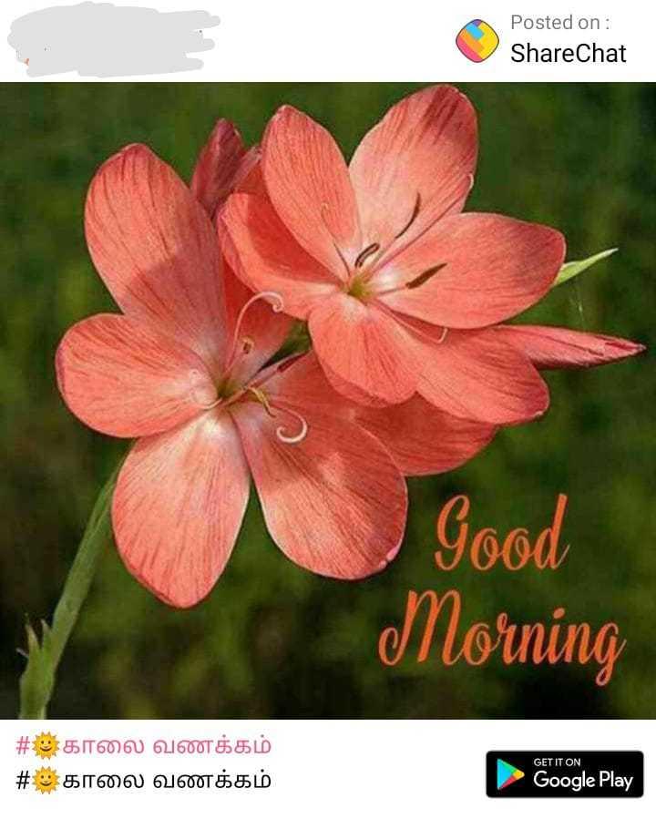 🌞காலை வணக்கம் - Posted on : ShareChat Good Morning # : காலை வணக்கம் # காலை வணக்கம் GET IT ON Google Play Google Play - ShareChat