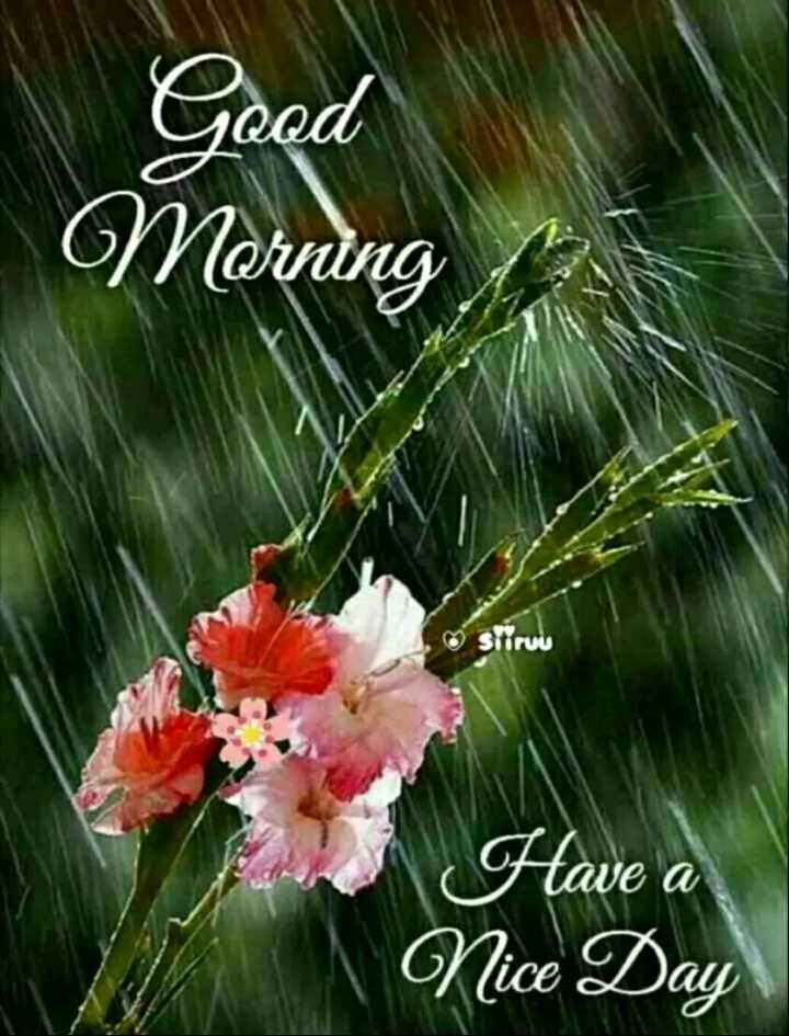 🌞காலை வணக்கம் - Good Morning Sitiru Have a Nice Day - ShareChat