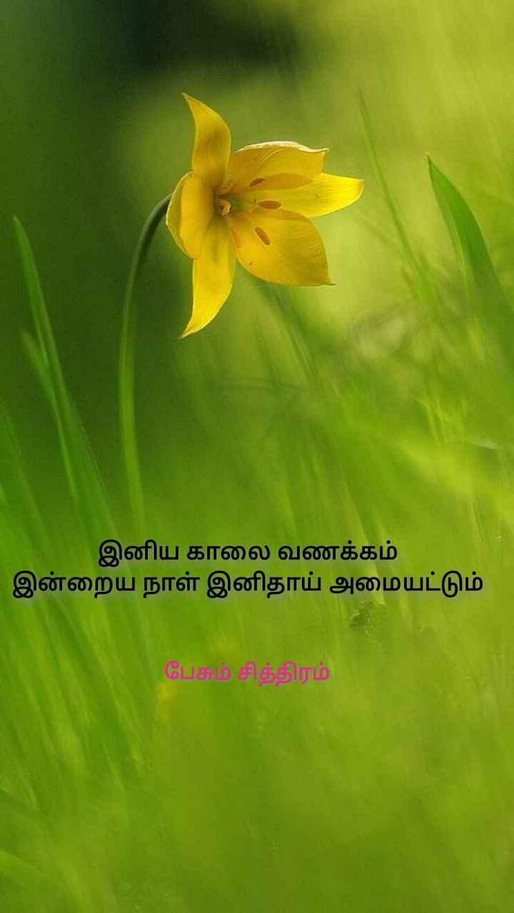 🌞காலை வணக்கம் - இனிய காலை வணக்கம் ' இன்றைய நாள் இனிதாய் அமையட்டும் பேசும் சித்திரம் - ShareChat