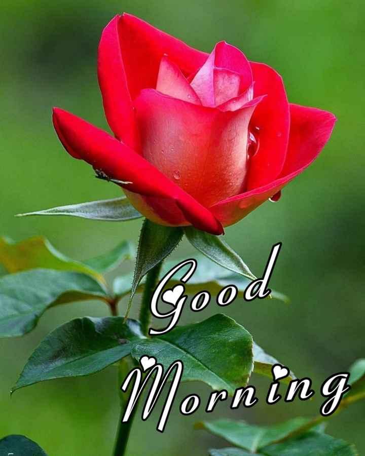🌞காலை வணக்கம் - Good Morning - ShareChat