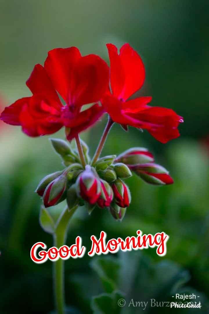 🌞காலை வணக்கம் - Good Morning - Rajesh - © Amy BurzPhotoGrid - ShareChat