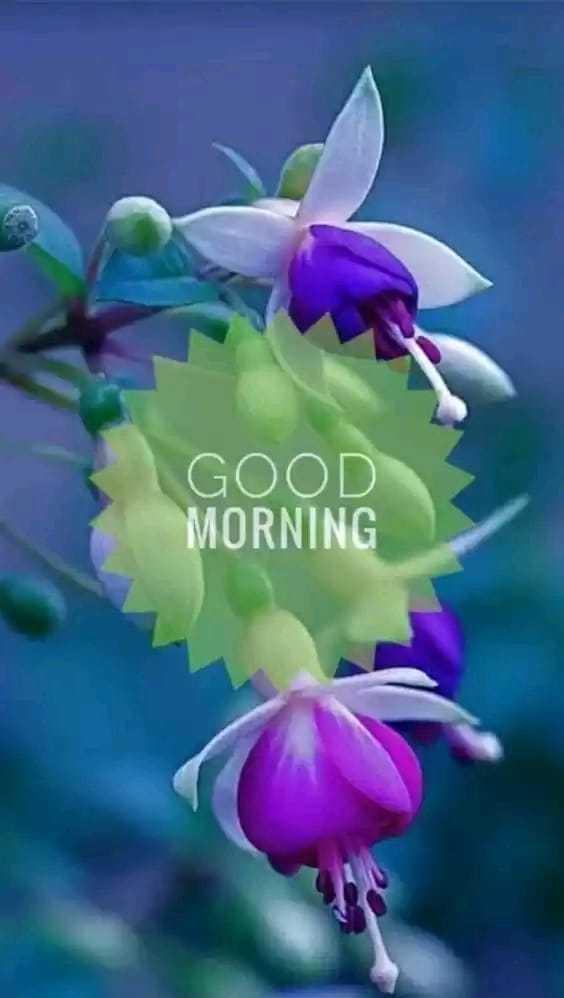 🌸💐காலை வணக்கம்🌹🌺 - GOOD MORNING - ShareChat