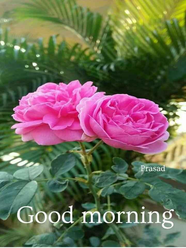 🌞காலை வணக்கம் - Prasad Good morning - ShareChat