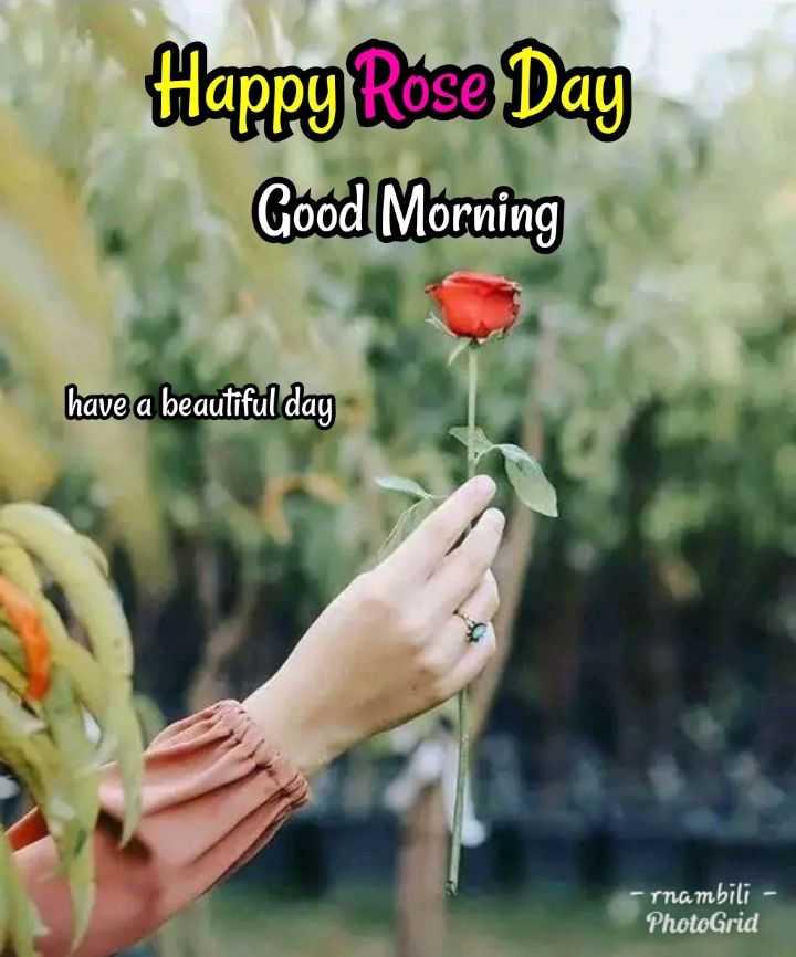 🌞காலை வணக்கம் - Happy Rose Day Good Morning have a beautiful day rnambili PhotoGrid - ShareChat