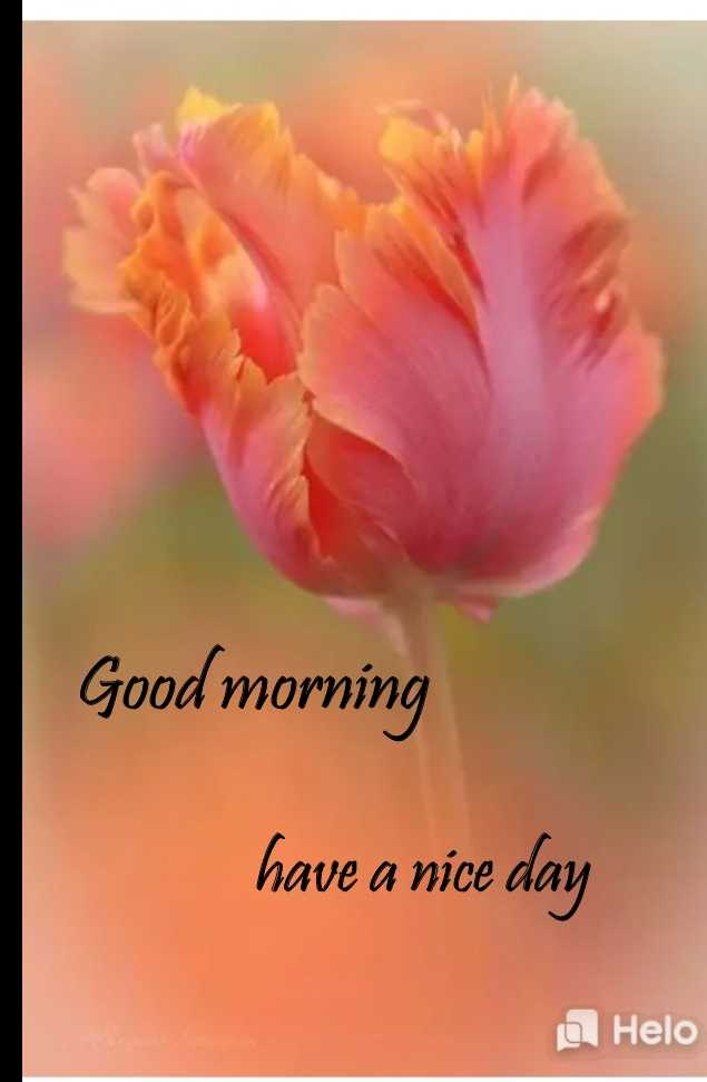 🌞காலை வணக்கம் - Good morning have a nice day - ShareChat