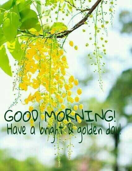 🌞காலை வணக்கம் - GOOD MORNING ! Have a bright & golden dow ! - ShareChat