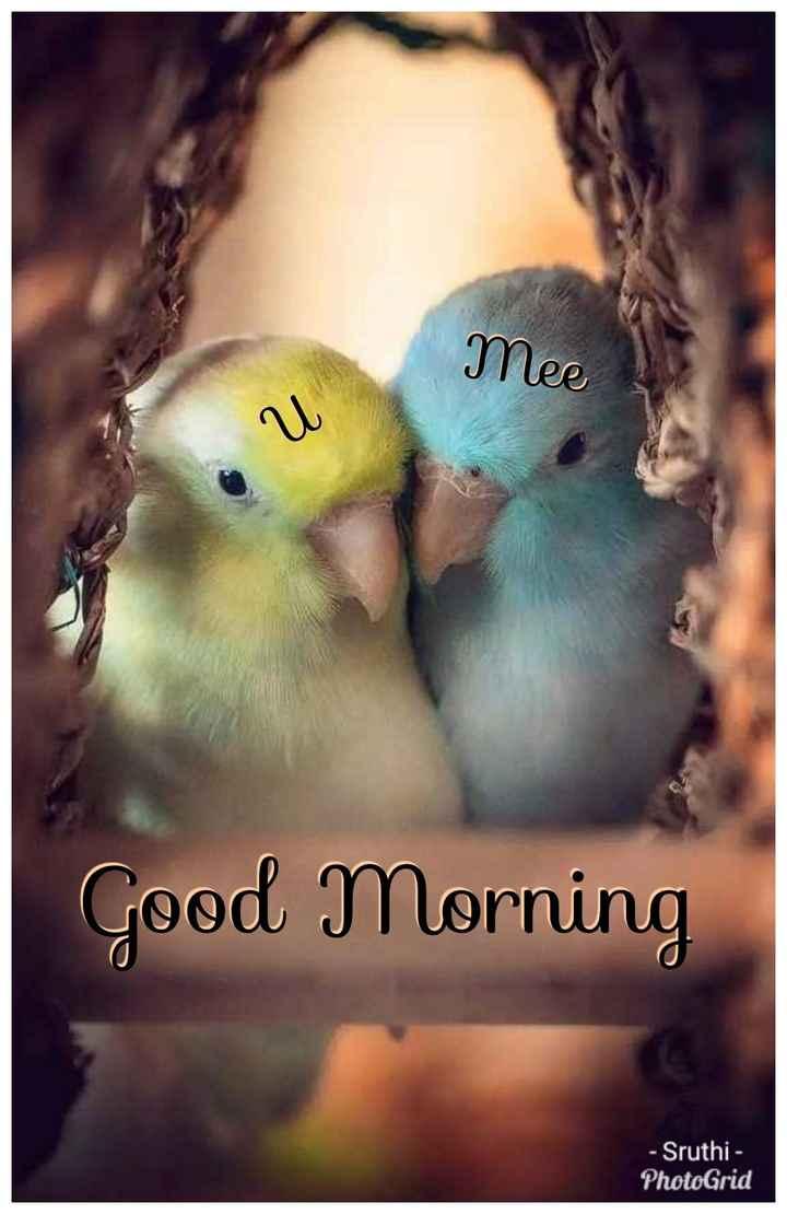 🌞காலை வணக்கம் - mee Good Morning - Sruthi - PhotoGrid - ShareChat