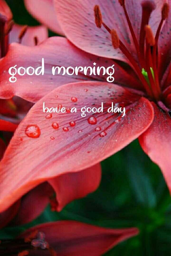 🌞காலை வணக்கம் - good morning bave a good day - ShareChat