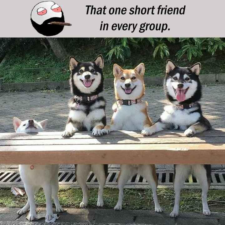 😅 தமிழ் மீம்ஸ் - That one short friend in every group . - ShareChat