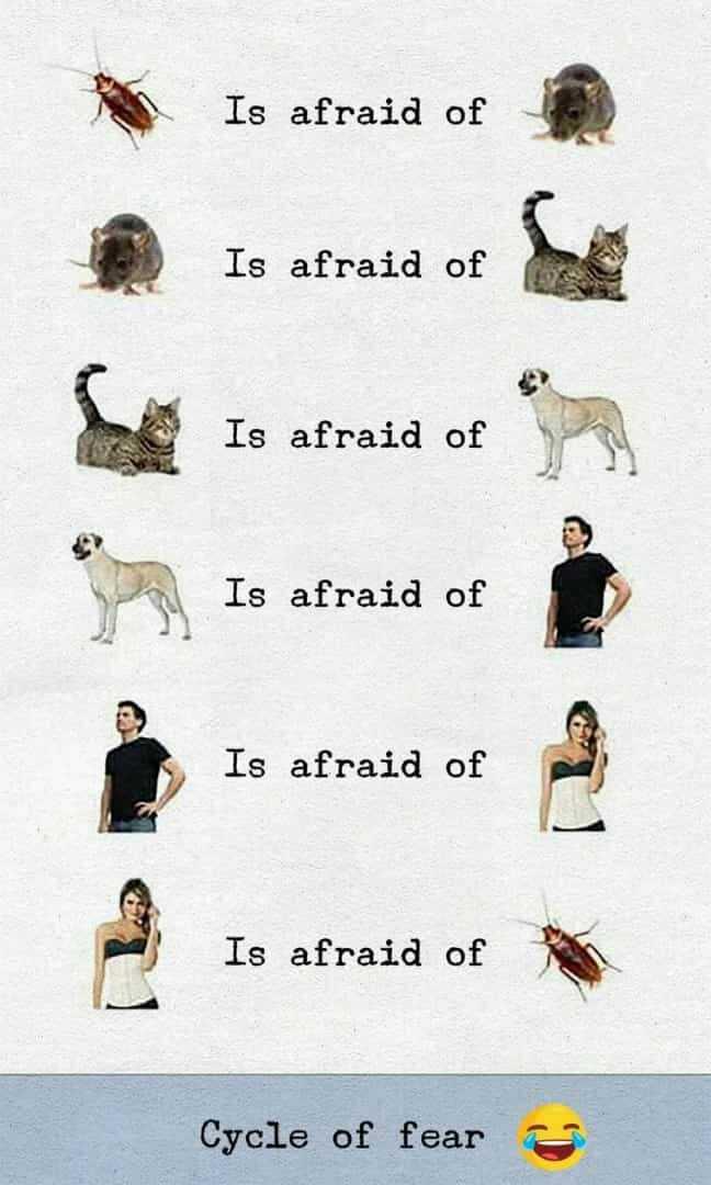 🤔தெரிந்து கொள்வோம் - Is afraid of Is afraid of Is afraid of Is afraid of Is afraid of Is afraid of Cycle of fears - ShareChat