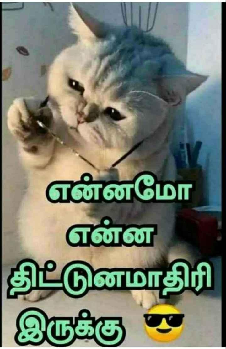 🤔தெரிந்து கொள்வோம் - என்னமோ என்ன திட்டுனமாதிரி இருக்கு - - ShareChat