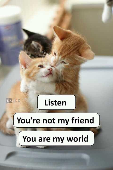 நட்புடன் - SADCAM Listen You ' re not my friend You are my world - ShareChat
