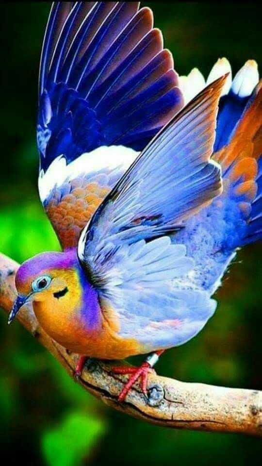 பறவைகளை காப்போம் - ShareChat