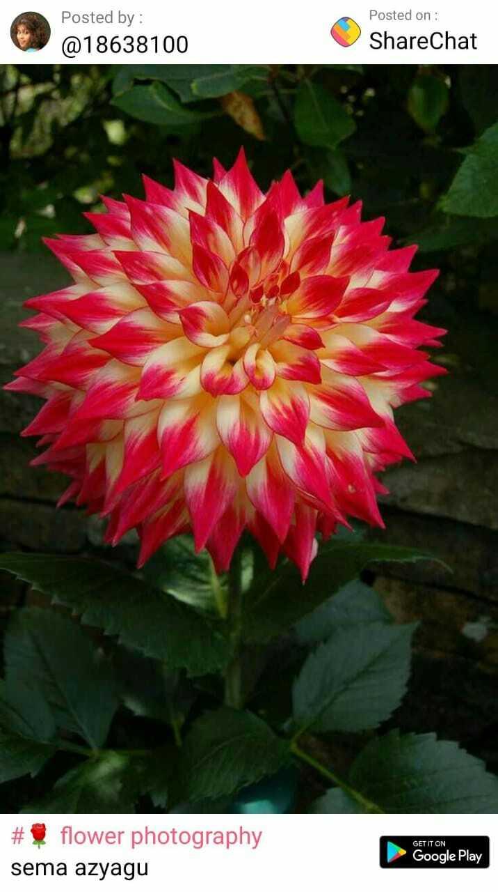 🎬ரன்வீர் சிங்குடன் நடிக்கும் ஜீவா - Posted by : @ 18638100 Posted on : ShareChat GET IT ON # flower photography sema azyagu Google Play - ShareChat