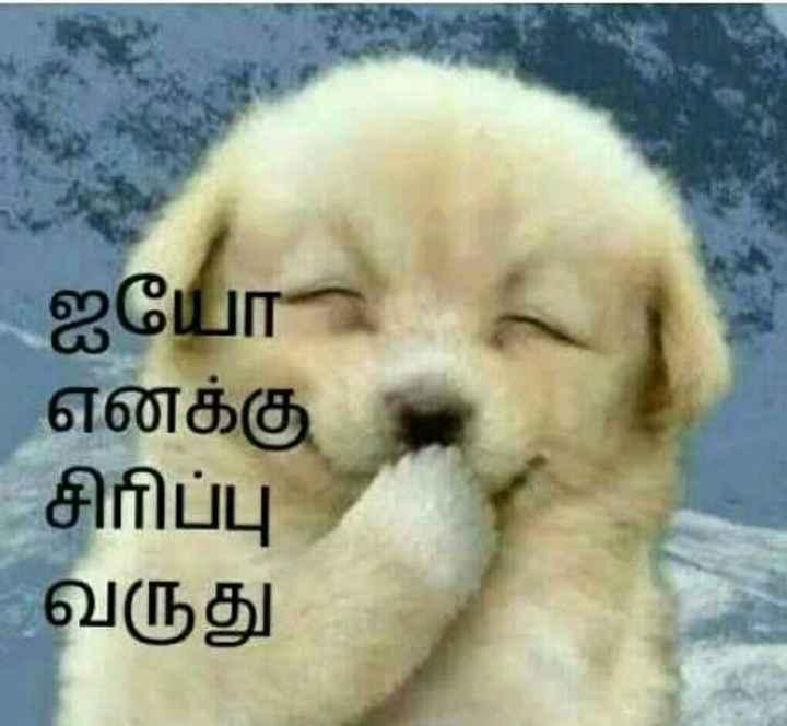 🤣 லொள்ளு - ஐயோ எனக்கு சிரிப்பு வருது - ShareChat
