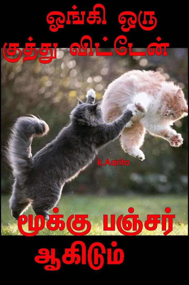 🤣 லொள்ளு - ஓங்கி ஒரு குந்து விட்டேன் k . Aarifa மூக்கு பஞ்சர் ஆகிடும் - ShareChat