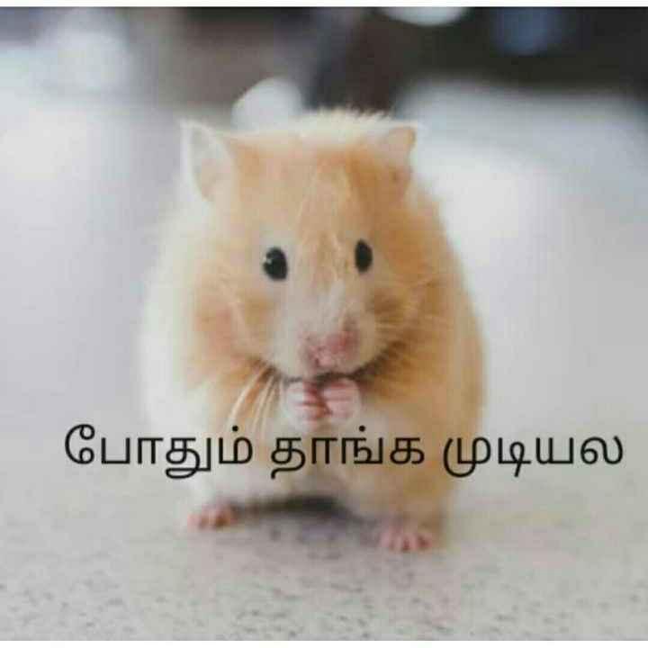 🤣 லொள்ளு - போதும் தாங்க முடியல - ShareChat