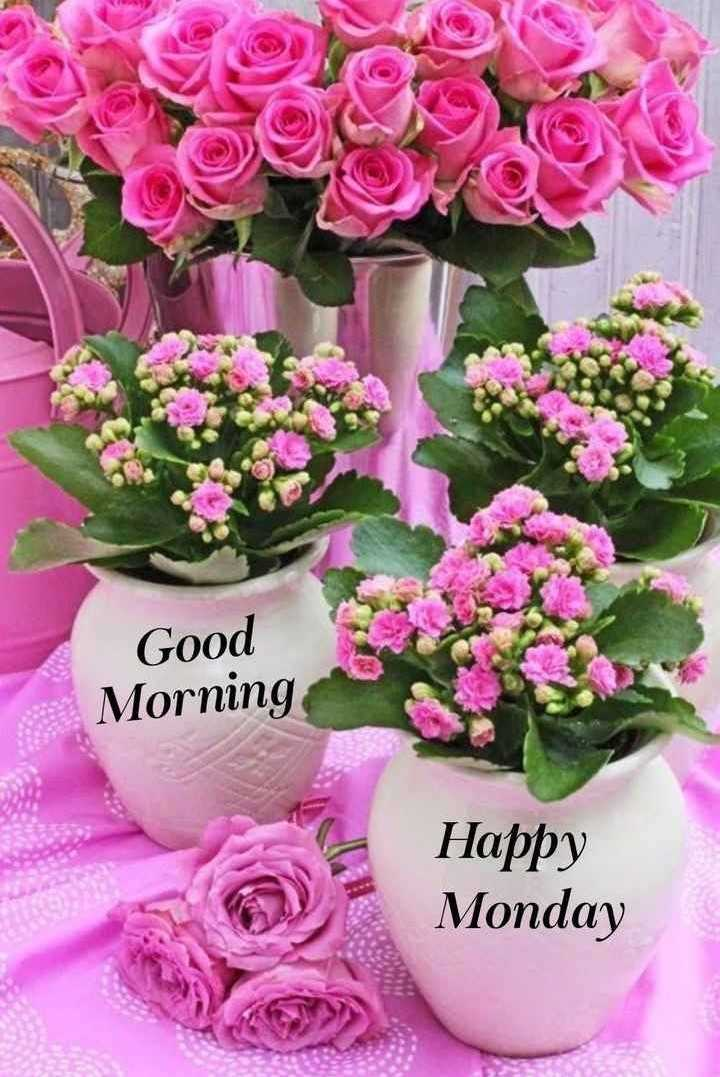 💐வாழ்த்து - Good Morning Happy Monday - ShareChat