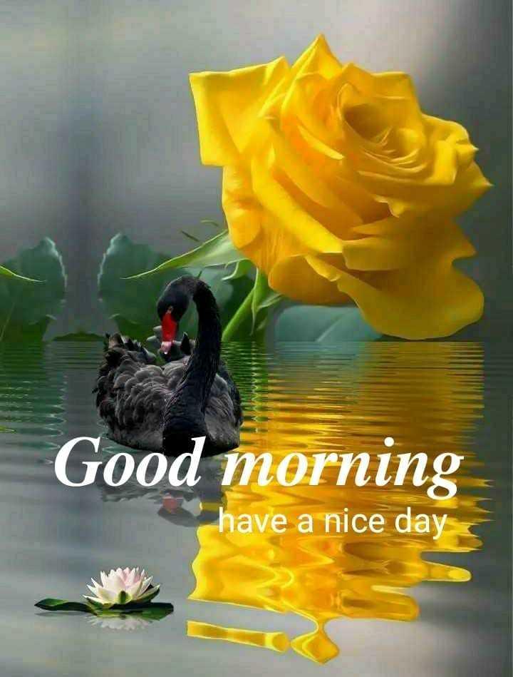 🌷 வாழ்த்து - Good morning have a nice day - ShareChat