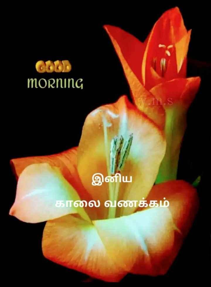 🌷 வாழ்த்து - GOOD morning M . S இனிய காலை வணக்கம் - ShareChat