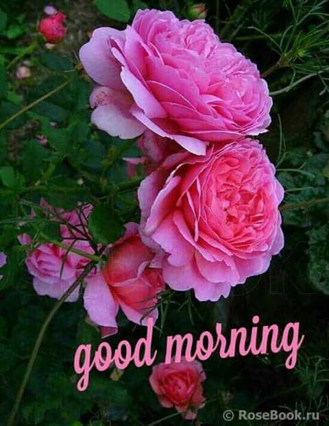 🌷 வாழ்த்து - good morning © RoseBook . ru - ShareChat