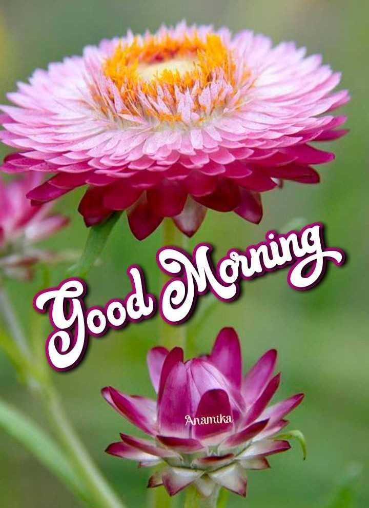 💐வாழ்த்து - Good Morning Anamika - ShareChat