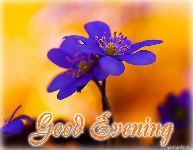 🌷 வாழ்த்து - ரேவதி அவரை greetings - day . com - ShareChat