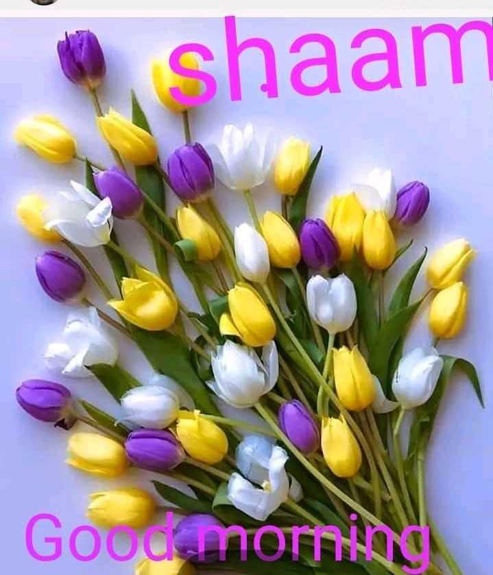 💐வாழ்த்து - shaam Goodamomis - ShareChat