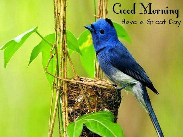 🌷 வாழ்த்து - Good Morning Have a Great Day - ShareChat