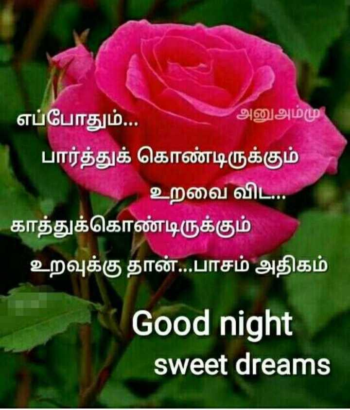 💐வாழ்த்து - எப்போதும் . . . அனு அம்மு , ' பார்த்துக் கொண்டிருக்கும் உறவை விட . . . ' காத்துக்கொண்டிருக்கும் உறவுக்கு தான் . . . பாசம் அதிகம் Good night sweet dreams - ShareChat