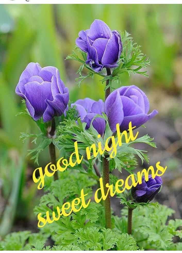 🌷 வாழ்த்து - good night sweet dreams - ShareChat