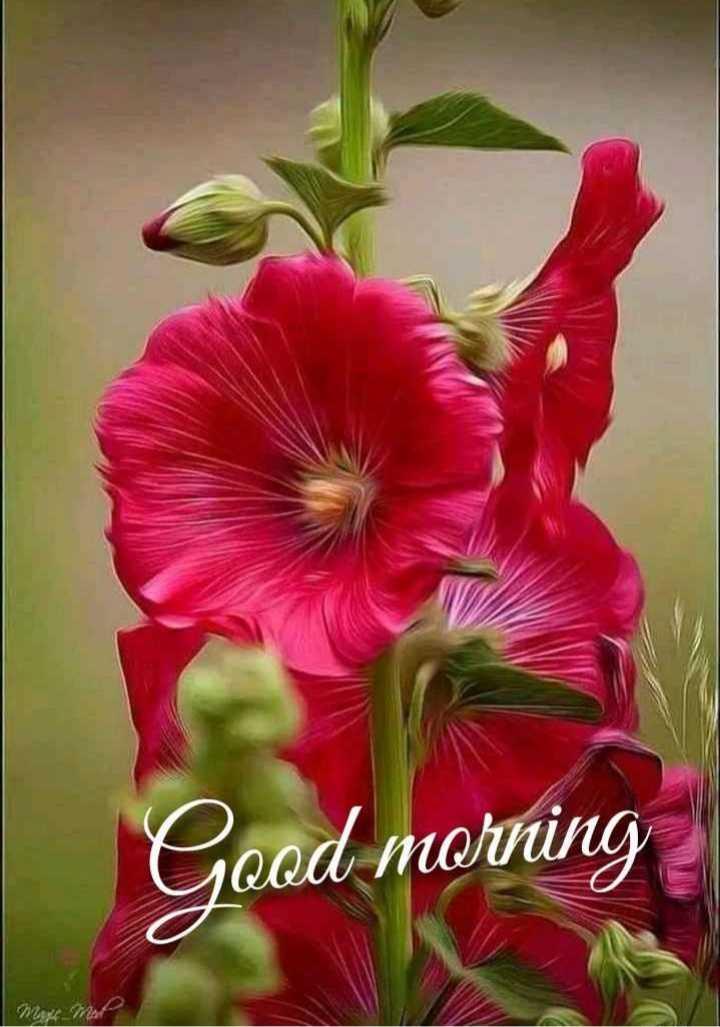 🌷 வாழ்த்து - Good morning - ShareChat