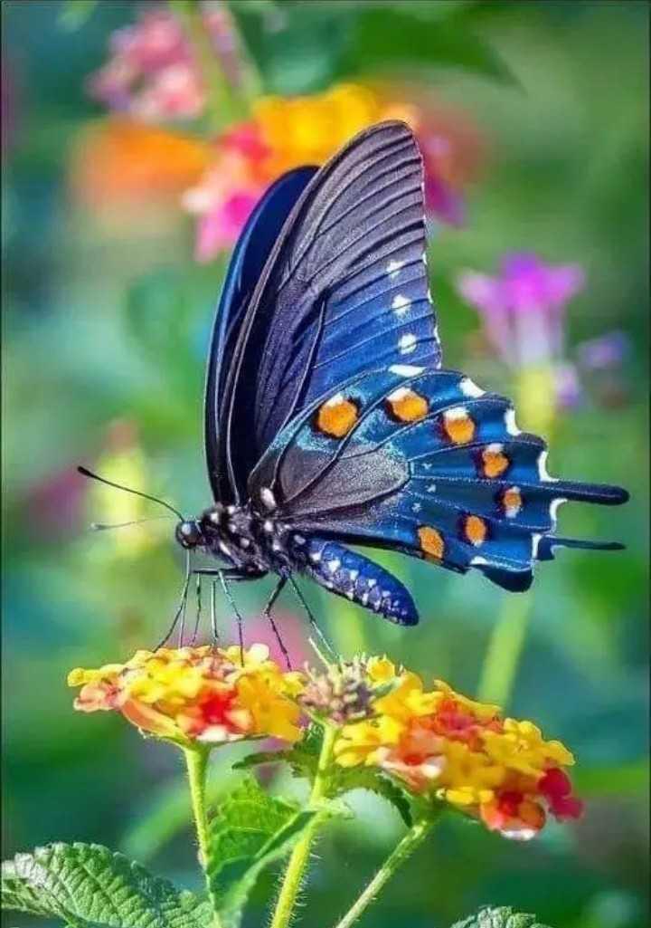 అందమైన పక్షులు - ShareChat