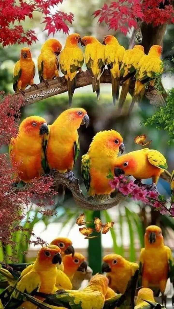 అందమైన పక్షులు - ព័តគេ - ShareChat