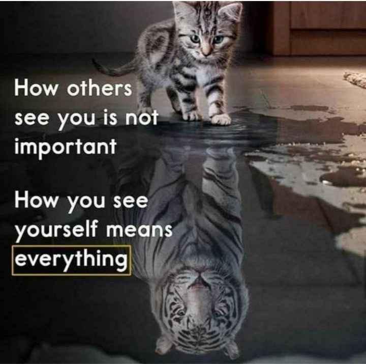 😏ఆటిట్యూడ్ స్టేటస్ - How others see you is not a important How you see yourself means everything - ShareChat