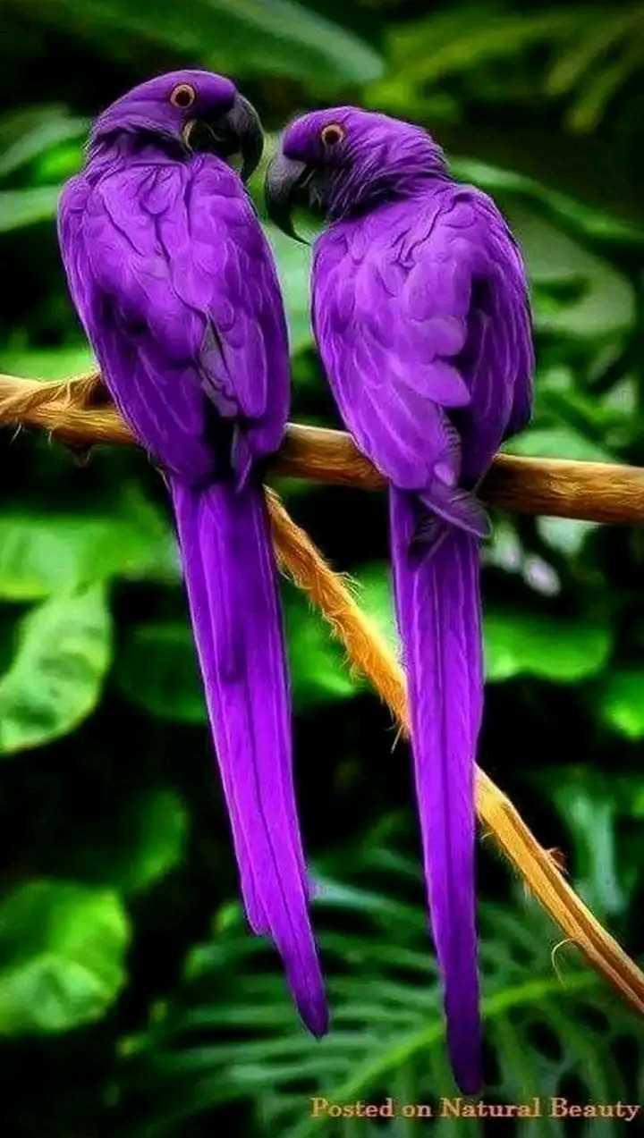 🏞 ప్రకృతి అందాలు - Posted on Natural Beauty - ShareChat