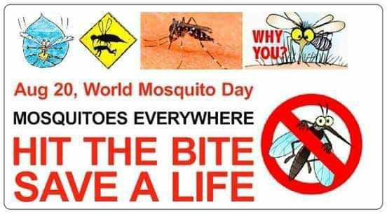 🦟ప్రపంచ దోమల దినోత్సవం🦟🌹 - WHY YOU WILL Aug 20 , World Mosquito Day MOSQUITOES EVERYWHERE 09 HIT THE BITE SAVE A LIFE - ShareChat