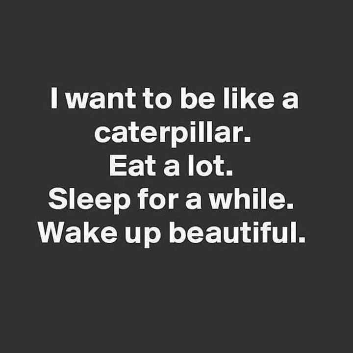 ప్రేరేపించే స్టేటస్ - I want to be like a caterpillar . Eat a lot . Sleep for a while . Wake up beautiful . - ShareChat