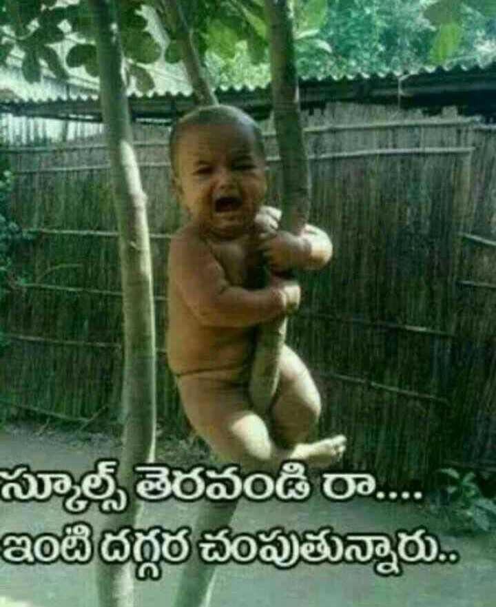 😆ఫన్నీ whatsapp స్టేటస్ - స్కూల్స్ తెరవండి రా . . . ఇటి దగ్గర చంపుతున్నారు . - ShareChat