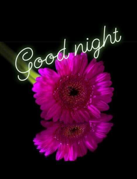 బుధవారం స్పెషల్ విషెస్ - Good night - ShareChat