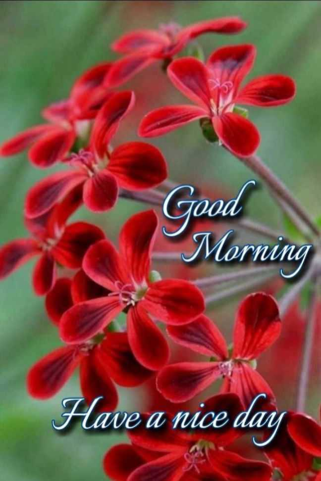 🌷బుధవారం స్పెషల్ విషెస్ - Good Morning Have a nice day - ShareChat