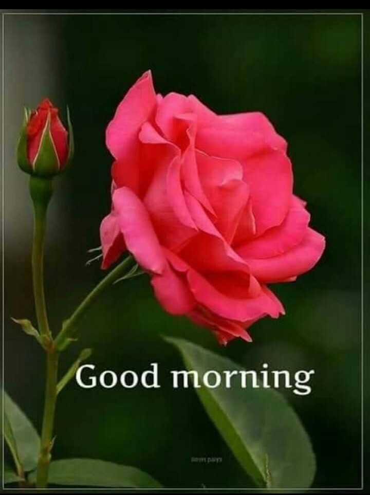 బుధవారం స్పెషల్ విషెస్ - Good morning - ShareChat