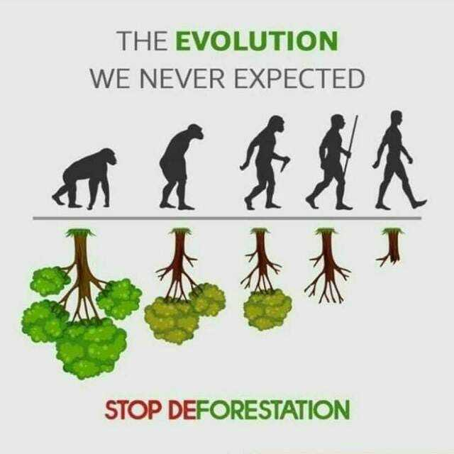 మానవ సేవయే మాధవసేవ - THE EVOLUTION WE NEVER EXPECTED STOP DEFORESTATION - ShareChat