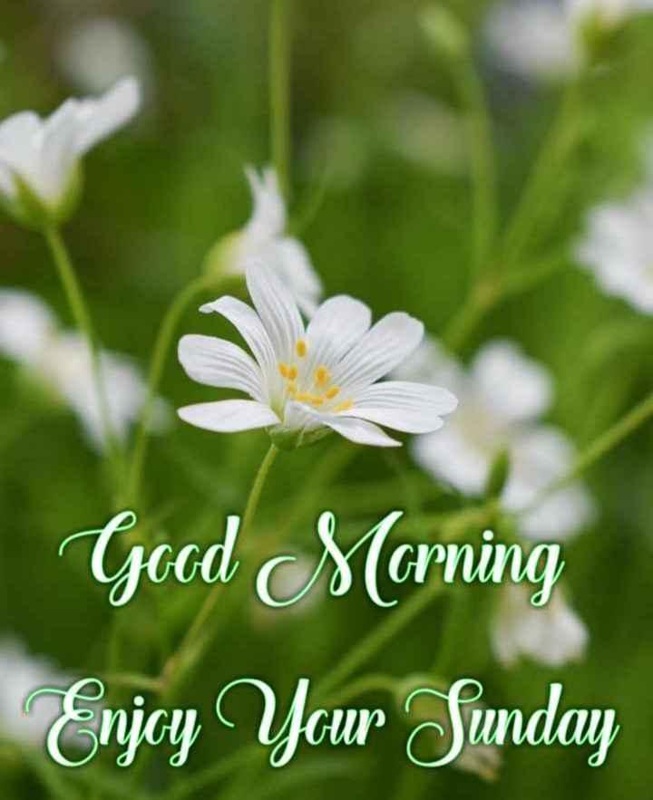 👋విషెస్ స్టేటస్ - Good Morning Enjcy Your Sunday - ShareChat