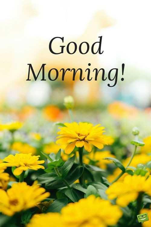 👋విషెస్ స్టేటస్ - Good Morning ! - ShareChat