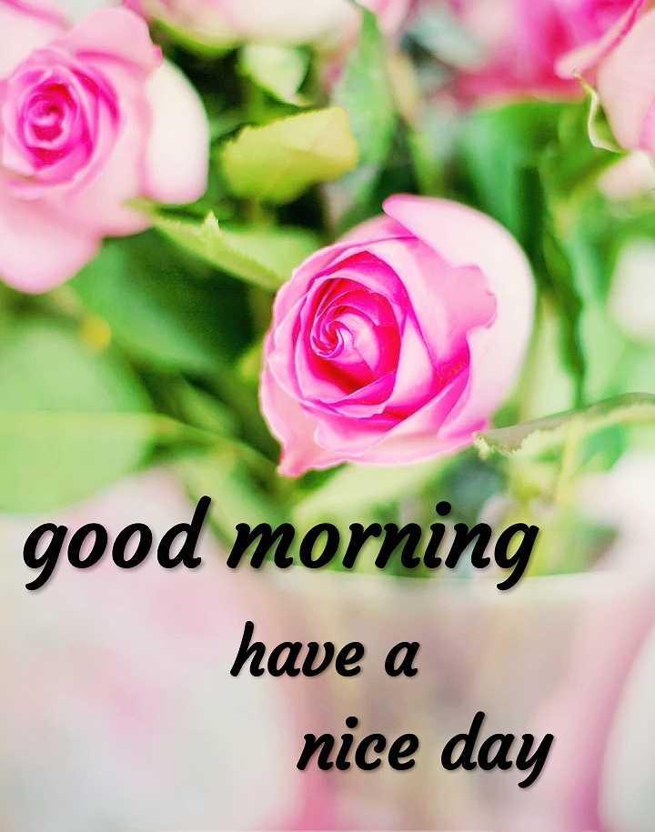 👋విషెస్ స్టేటస్ - good morning have a nice day - ShareChat