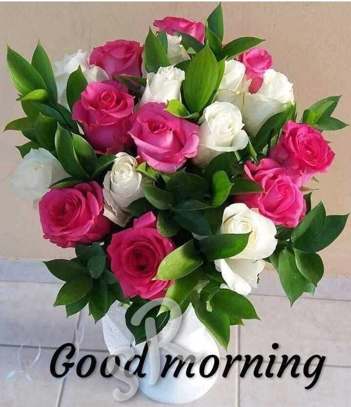 👋విషెస్ స్టేటస్ - Good morning - ShareChat